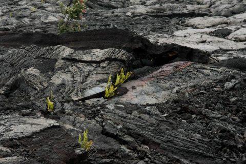 Lava landscape, Big island