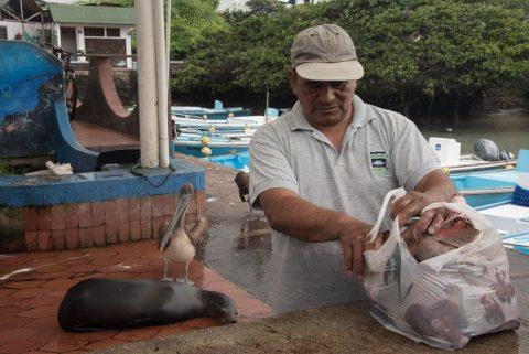 Fish market, Puerto Ayora, Santa Cruz