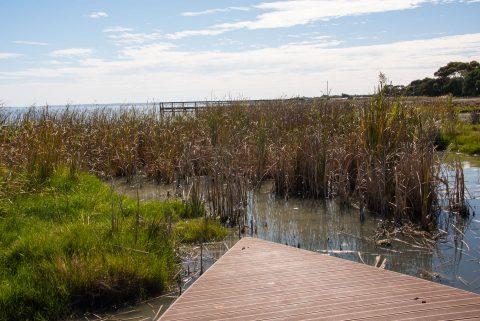 River Murray, Meningle, SA