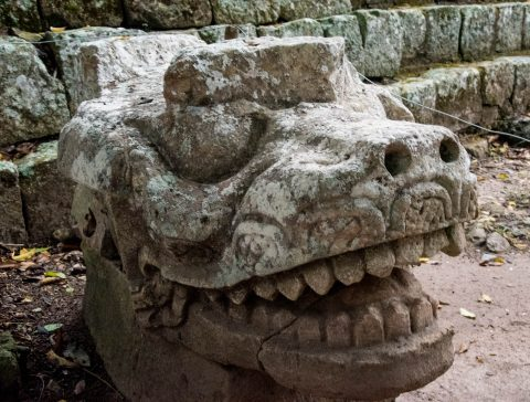 Crocodile head statue, Coopan