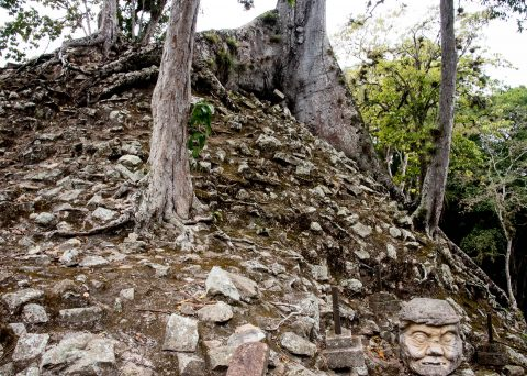 Pauahtun head with kapok tree, Copan
