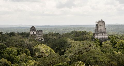 View from Temple IV. Tikal