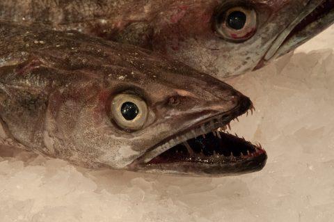 Fish stail, Mercat de Santa Caterina, Barcelona