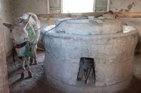 Potter's donkey grinding the glaze, Gijduvon