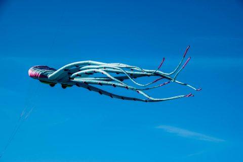 Kite at Seaside