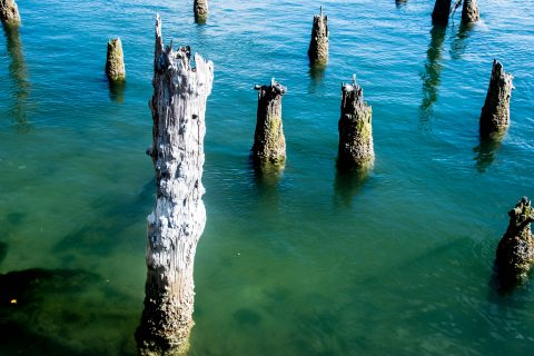 Remains of town jetty, Florence