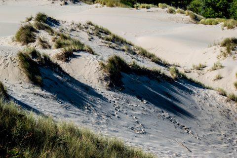 Oregon Dunes Overlook, Oregon