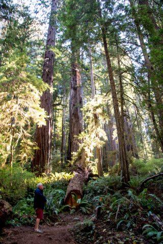 Prairie Creek Rewoods SP, California
