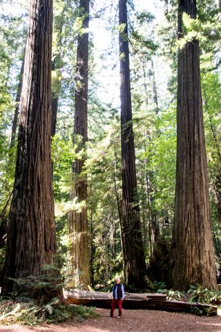 Humboldt Redwoods SP, California