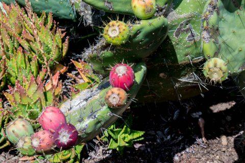 Mendocino Botanical Gardens, California