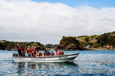 Pinguinera Punihuil visit boat, Chiloe, Chhile