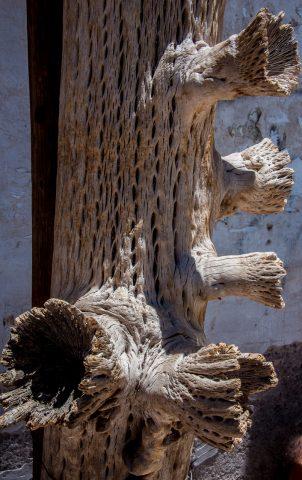 Dried cactus, Humahuaca, Argentina