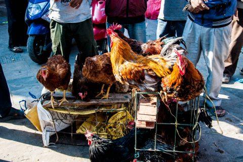 Chicken for sale, Durbar Square, Kathmandu, Nepal