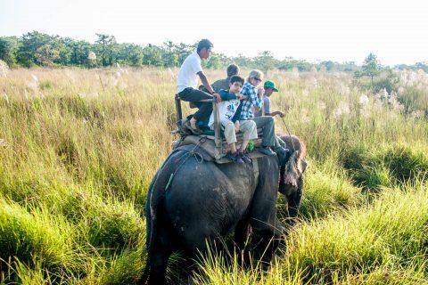 Elephant ride,  Royal Chitwan National Park, Nepal