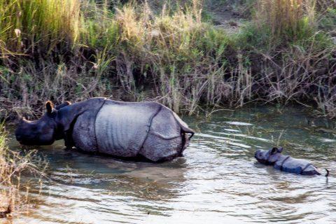 Rhino from elephant,  Royal Chitwan National Park, Nepal