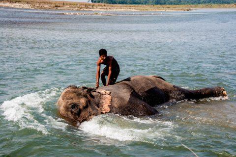 Elephant bathing,  Royal Chitwan National Park, Nepal