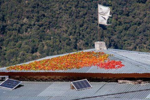 Chillis drying on roof, Punakha Valley, Bhutan