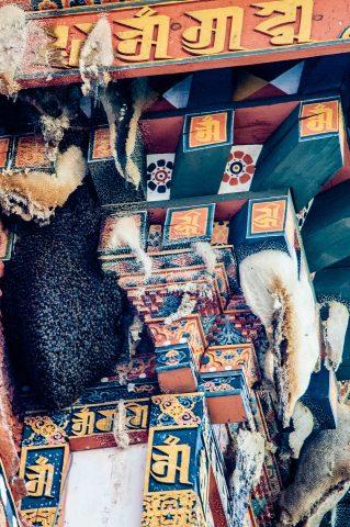 Bees honey combs, Punakha Dzong, Bhutan