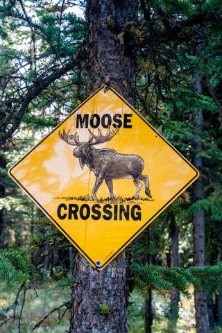 Road sign, Alaska