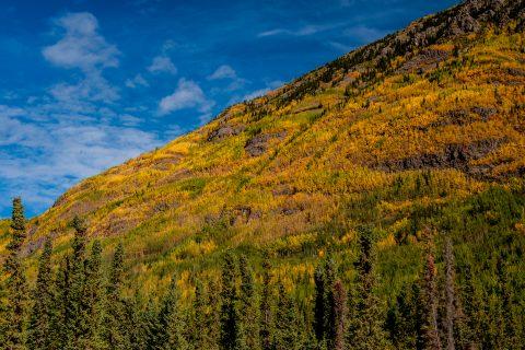 Autumn colour, Pickhandle Lake, Yukon, Canada