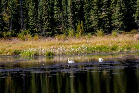 Tetlin National Wildlife Refuge, Tok,  Alaska