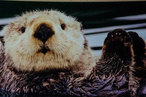 Sea otter painting,  Homer Spit, Alaska