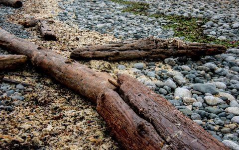 Driftwood, Quadra Island beach