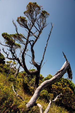 Shoreline Bog walk, Vancouver Island