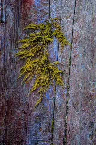 Lichen, Botanical Gardens, Tofino