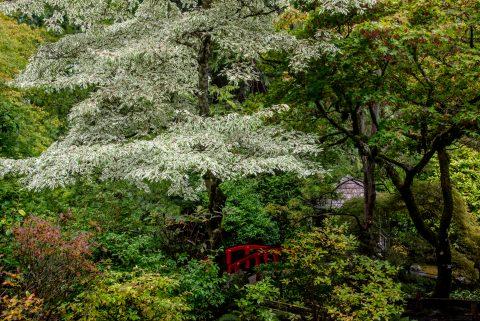 Japanense Garden, Butchart Gardens, Vancouver Island