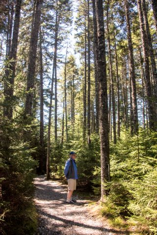 Forest, near Wolfe River,, New Brunswick