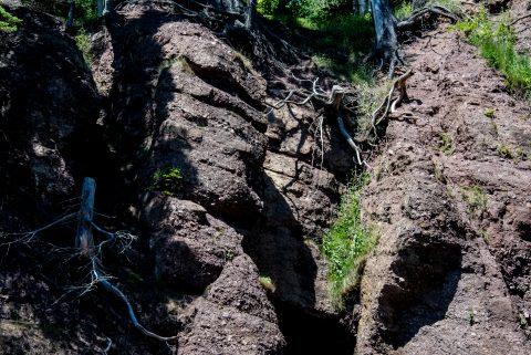 Tree roots on Hopewell Rocks. Bay of Fundy, New Brunswick