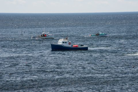 Lobster boats laying traps off Lakies Head, NS