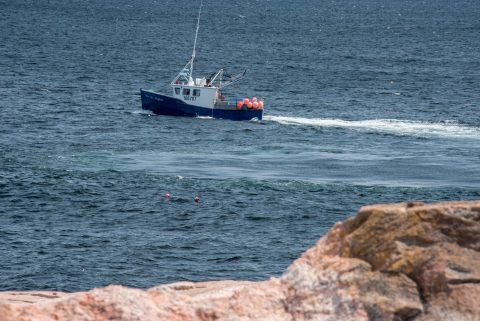 Lobster boat laying traps off Green Cove, NS