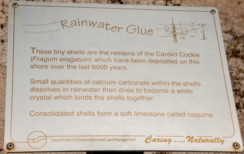 Coquina information, Hamelin Pool, WA