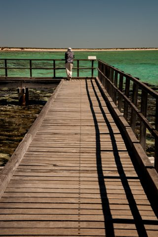 Boardwalk above stromatolites, Hamelin Pool, WA