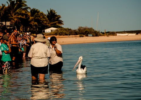 Pelican looking for food, Monkey Mia, Shark Bay, WA