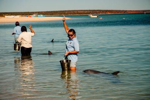 Dolphin feeding ending, Monkey Mia, Shark Bay, WA