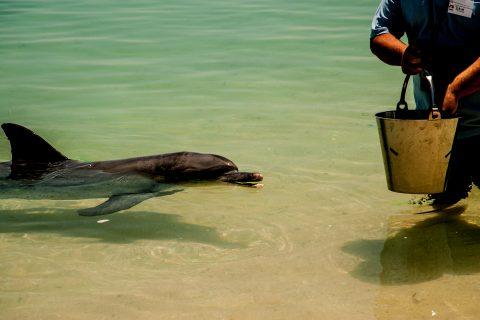Dolphin feeding, Monkey Mia, Shark Bay, WA