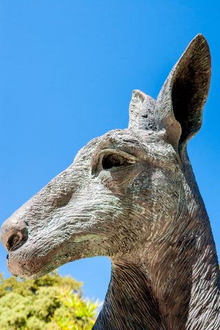 Kangaroo statue, Sterling Gardens, Perth WA