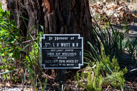 Tree dedicated to individual lost in war, Albany WA