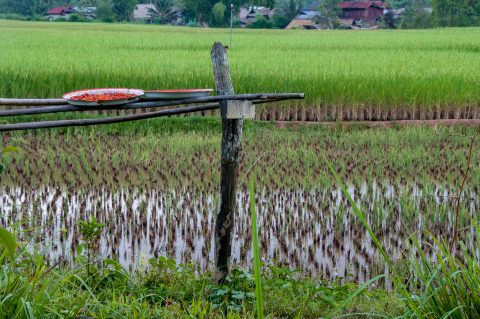 Rice fields, Akha village, Laos