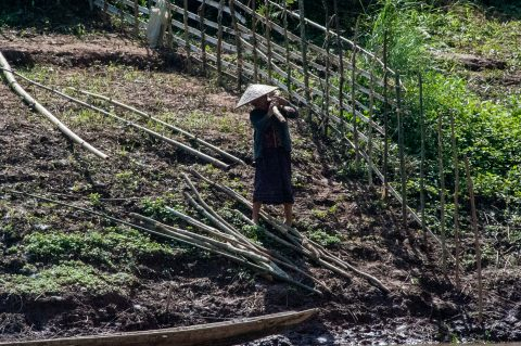 Cultivation on banks of Nam Ou River, Laos