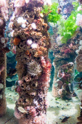 Wharf supports, Monterey Aquarium, California
