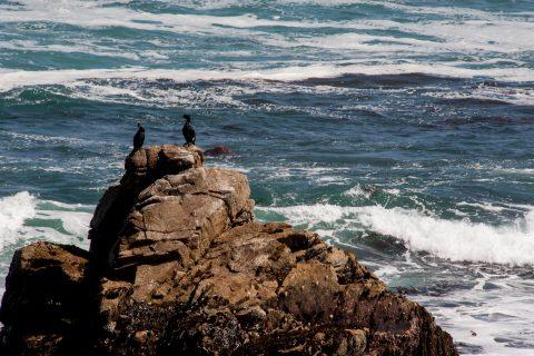 Point Joe, near Monterey, California