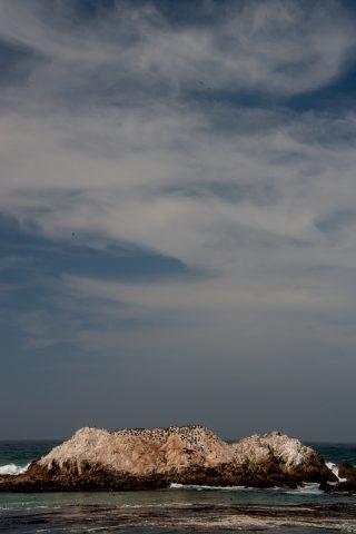 Bird Rock,, near Monterey, California