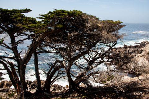 Cypress Point, near Monterey, California