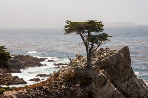 The Lone Cypress, near Monterey, California