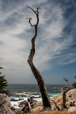 The Ghost Tree, near Monterey, California
