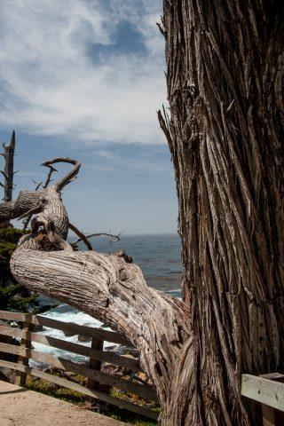 Pescadero Point, near monterey, California